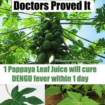 Miracle Cure for Dengue